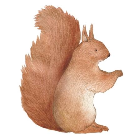Hartendief muursticker eekhoorn